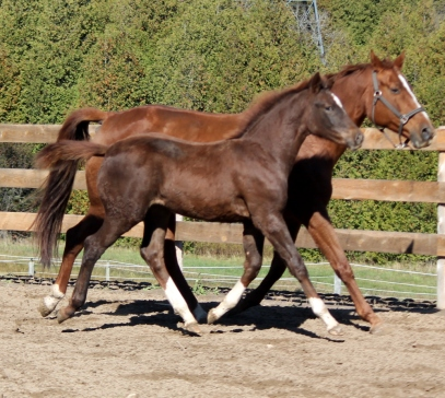 Trot with mom